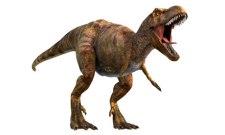 Tyrannosaurus rex or 'T rex'
