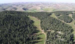 Diapositive24 Forêt de Yatir (Néguev)