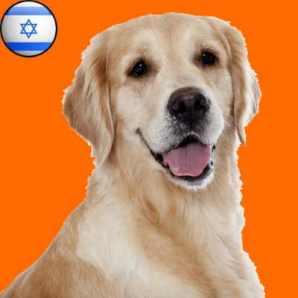 Chien sioniste.jpg