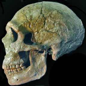 homme-de-neandertal.jpg